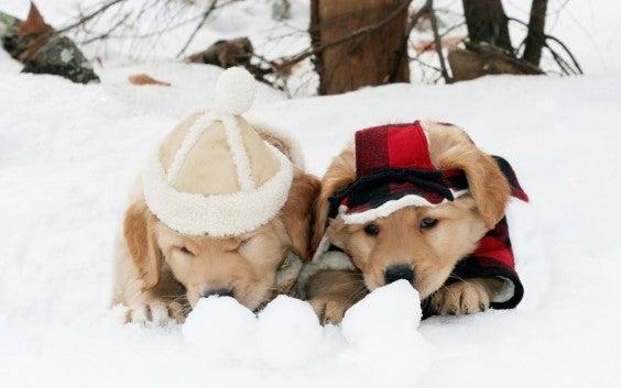 Cuccioli in mezzo alla neve