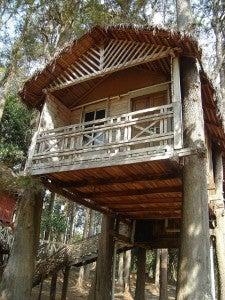 Dormire sugli alberi i tree hotel - Costruire case sugli alberi ...