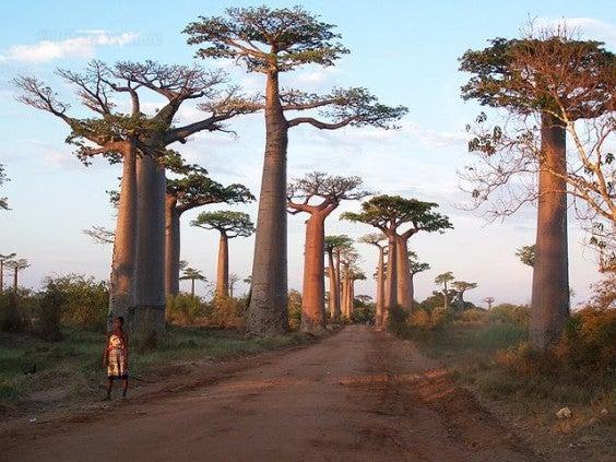 Madagascar luoghi da vedere prima che scompaiano