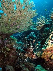 Migliori immersioni