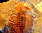Chengjiang Sito fossile (Cina)