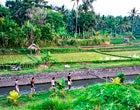 Paesaggio culturale di Bali: il sistema dei Subak  come manifestazione della filosofia Tri Hita Karana   (Indonesia)