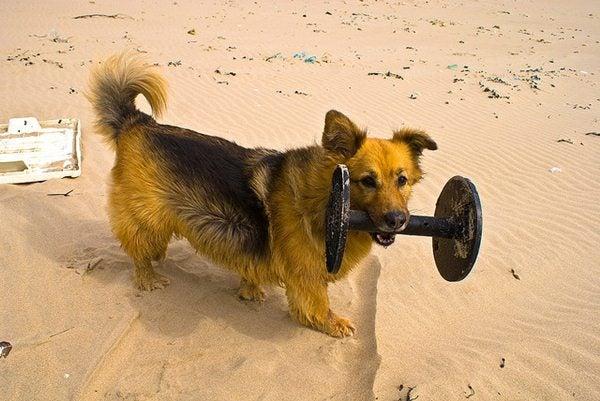 Gente da spiaggia - padrone del cane