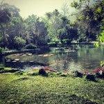 giardino botanico Rio