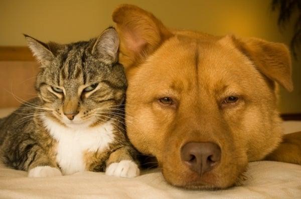 Cane e gatto-600