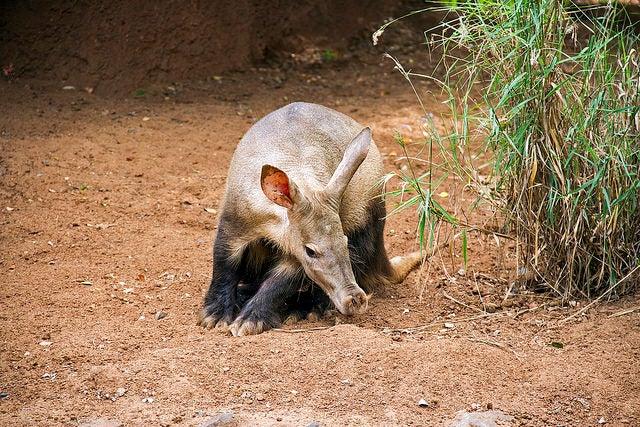 oritteropo animali nella savana edreams blog di viaggi