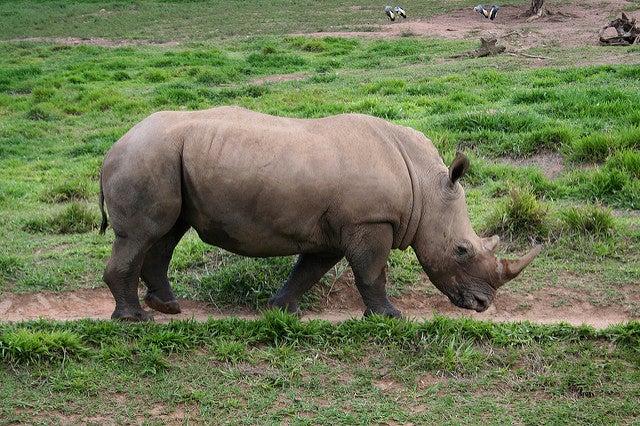 rinoceronte africa animale con la r edreams blog di viaggi
