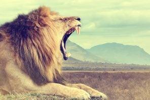 Animali africani dalla A alla Z