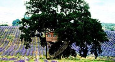 Dormire sugli alberi: i Tree Hotel