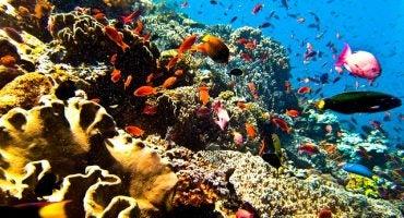 I 10 luoghi migliori del mondo per fare immersioni
