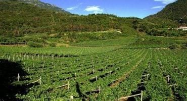 Un viaggio alla scoperta dei vini trentini