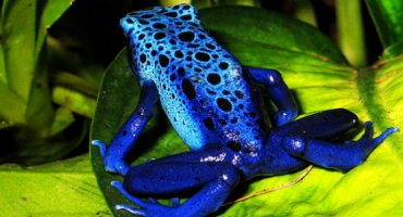 Gli animali con i colori più incredibili del mondo