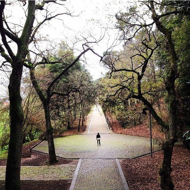 Serralves Park in winter