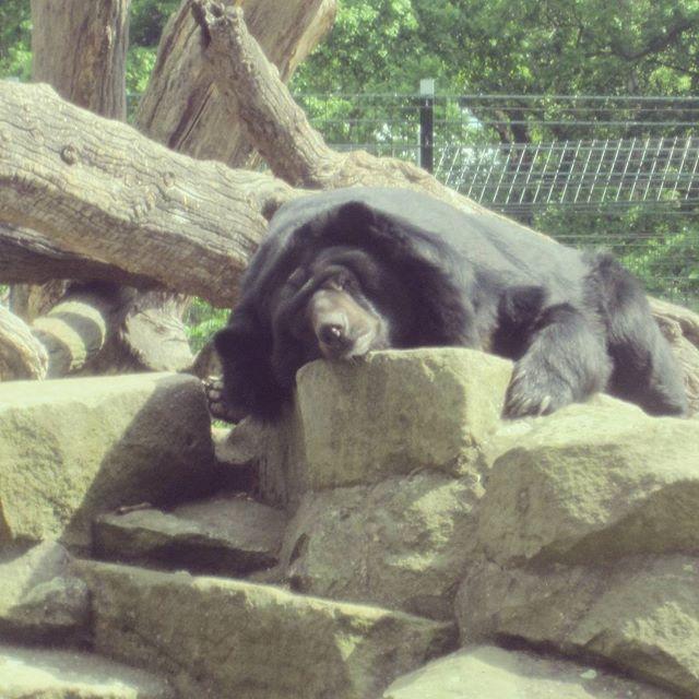 zoo di Berlino, orso bruno