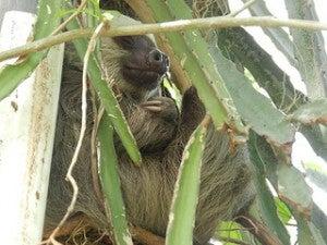Costarica animali
