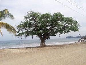 Costarica flora