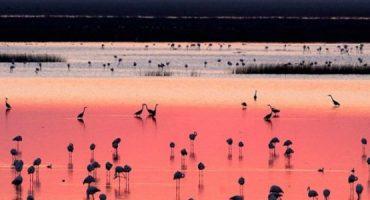 Natura, flamenco e shopping: cosa vedere durante un viaggio in Andalusia