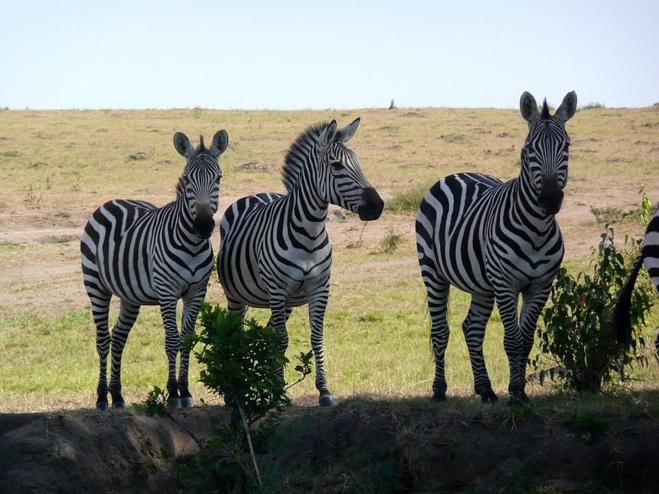 riseva Masai Mara luoghi da visitare edreams blog di viaggi