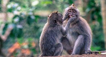 25 cose da fare a Bali