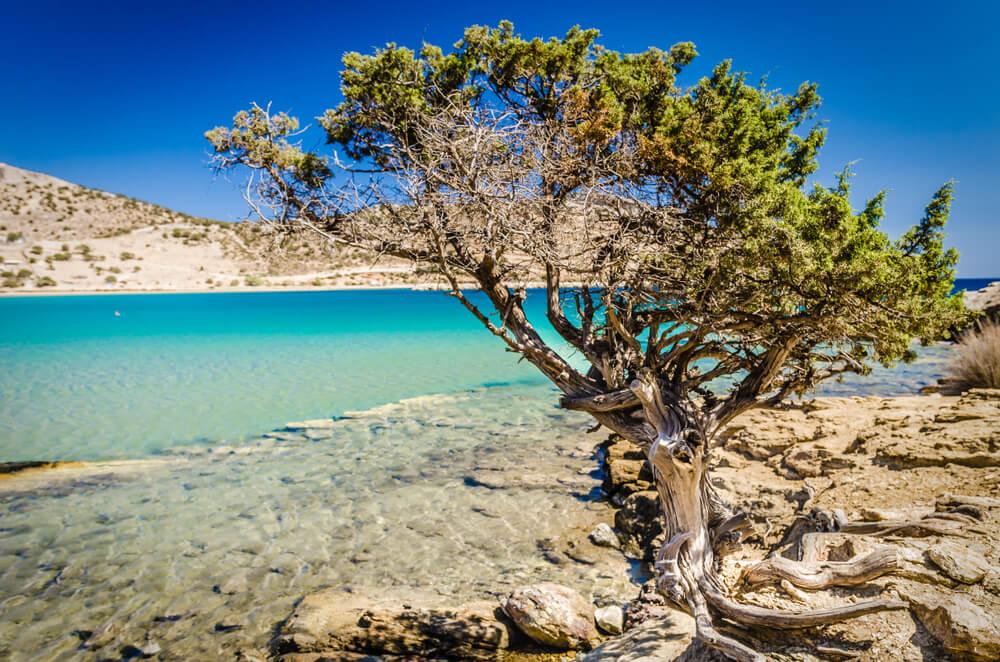 naxos albero spiaggia