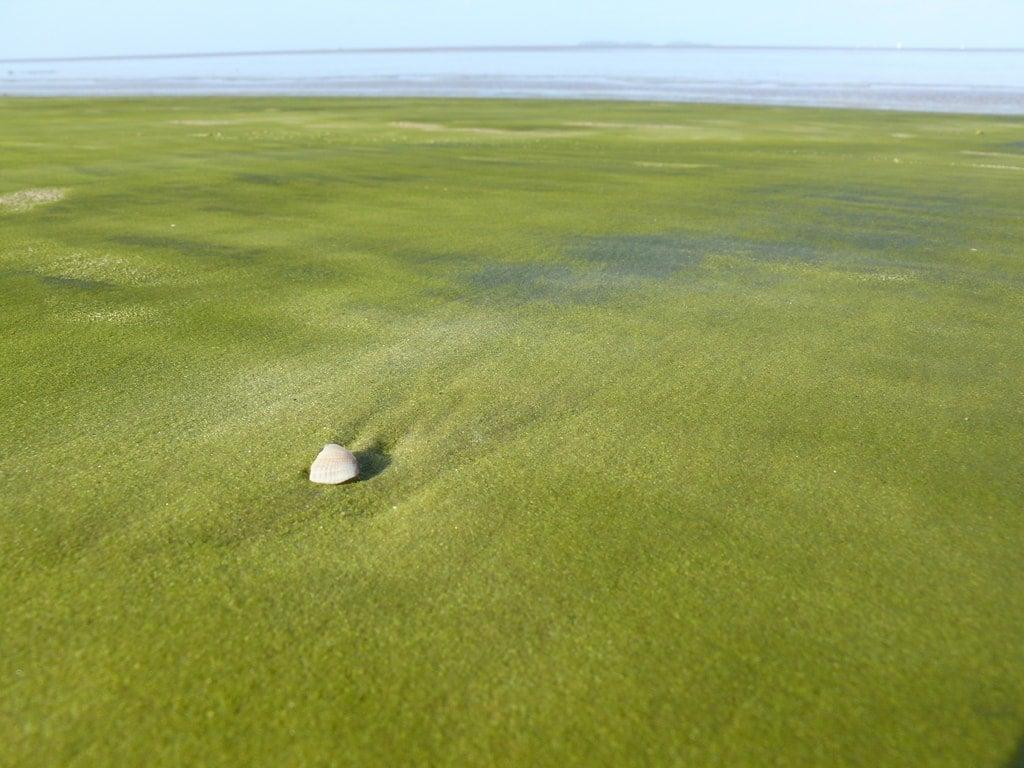 spiaggia verde kourou