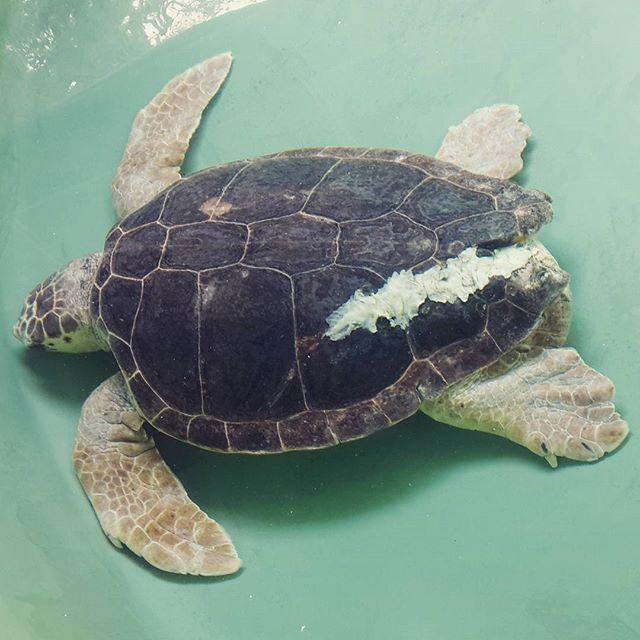 tartaruga cosa vedere in sicilia edreams blog di viaggi