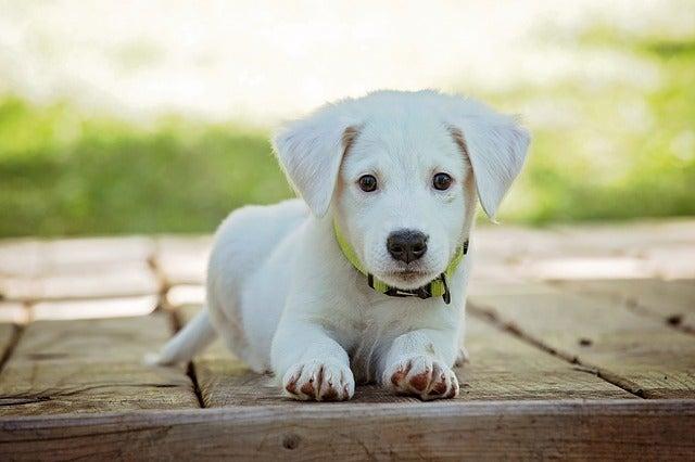 cucciolo cane - blog viaggi edreams