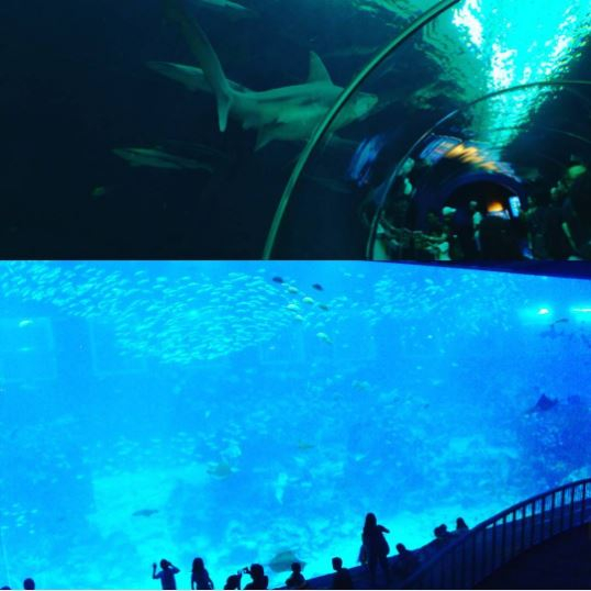 acuario de singapur