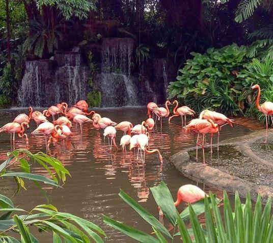 jurong bird park en singapur