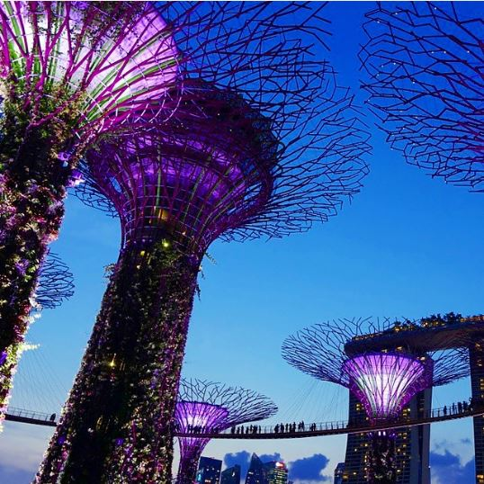 supertrees grove singapore