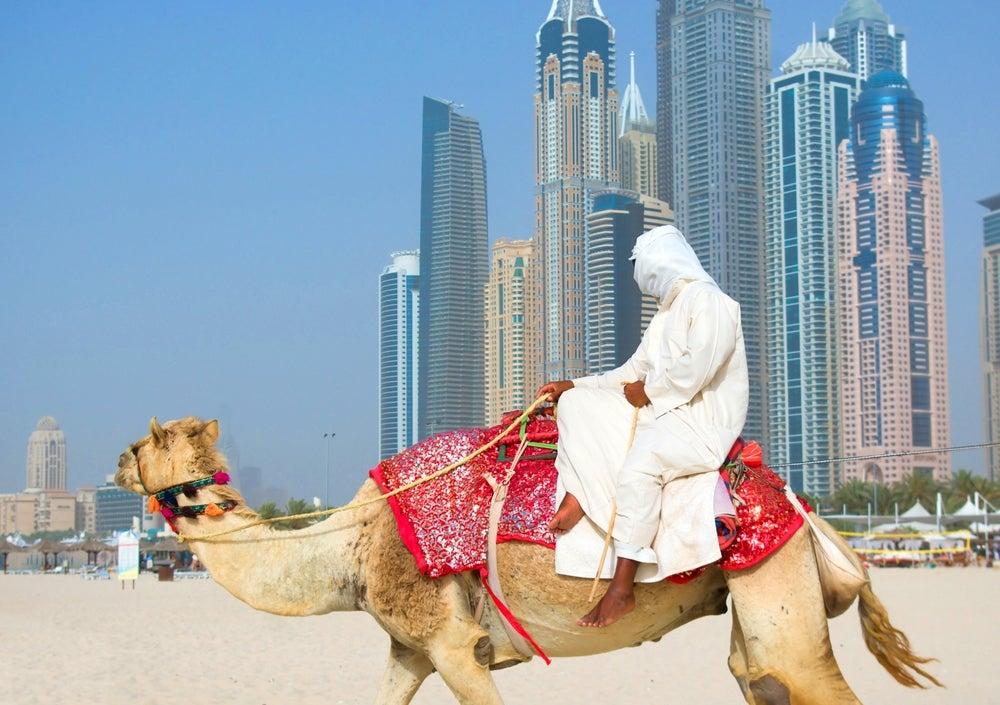 dubai spiaggia cammello