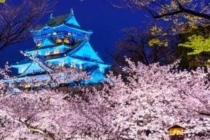 Giappone: ciliegi in fiore, dove e quando vederli durante l'hanami