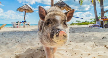 6 spiagge abitate da animali