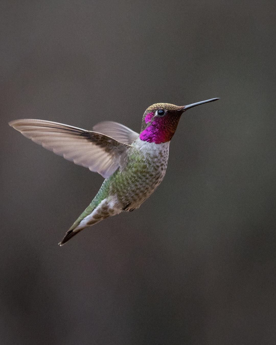 colibrì cose da fare ecuador edreams blog di viaggi