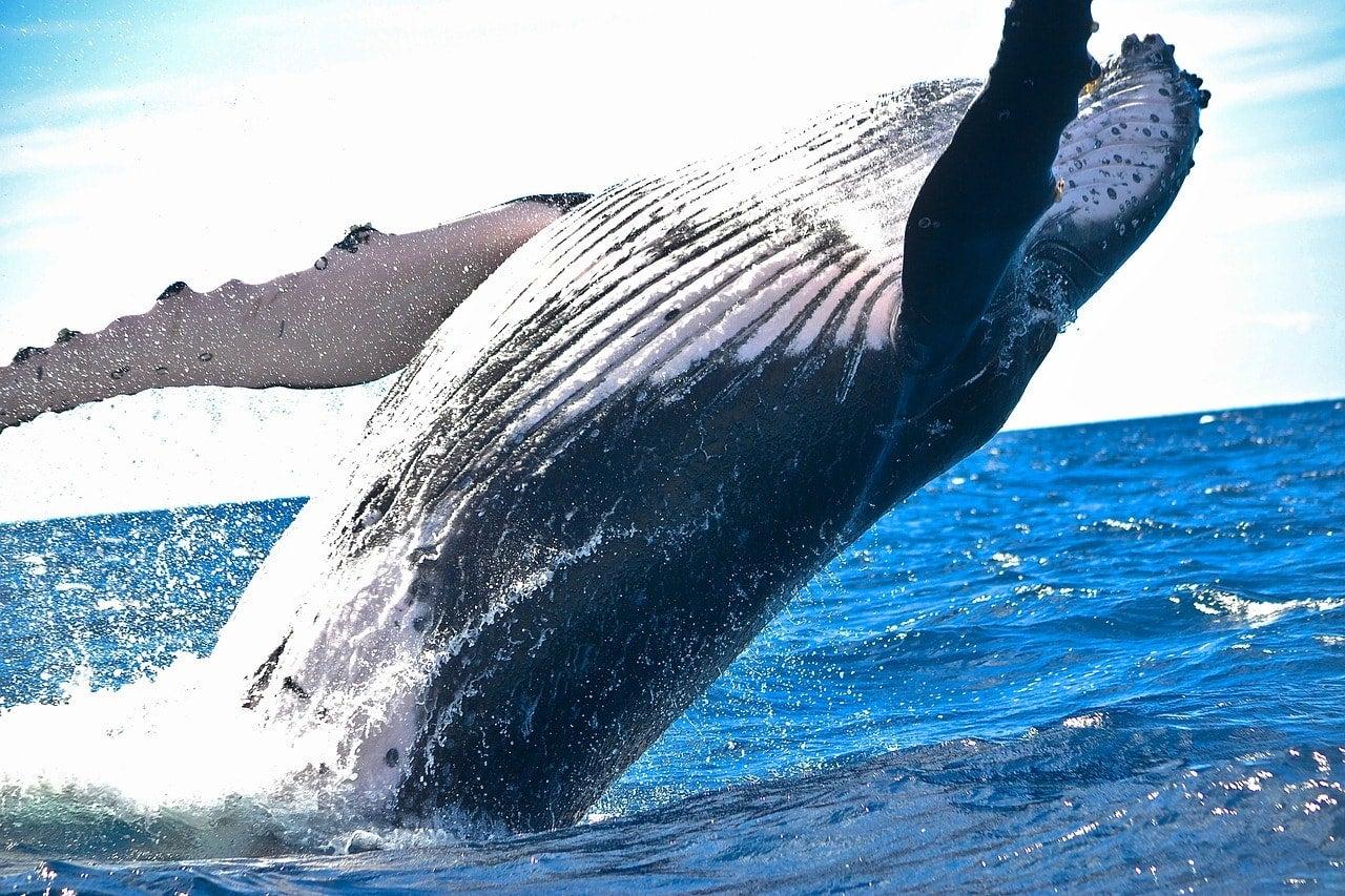 balena cose da fare ecuador edreams blog di viaggi