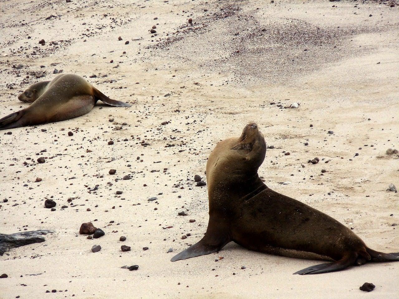 galapagos leone marino cose da fare ecuador edreams blog di viaggi