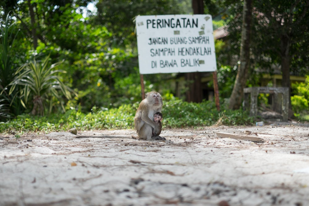 monkey beach malesia