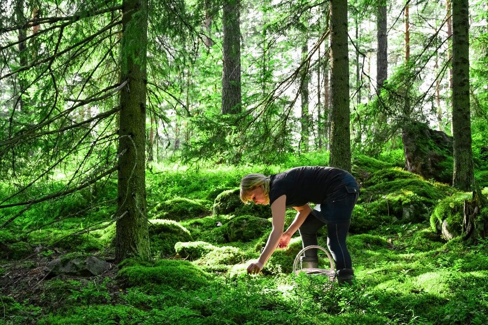 raccolta frutti di bosco finlandia
