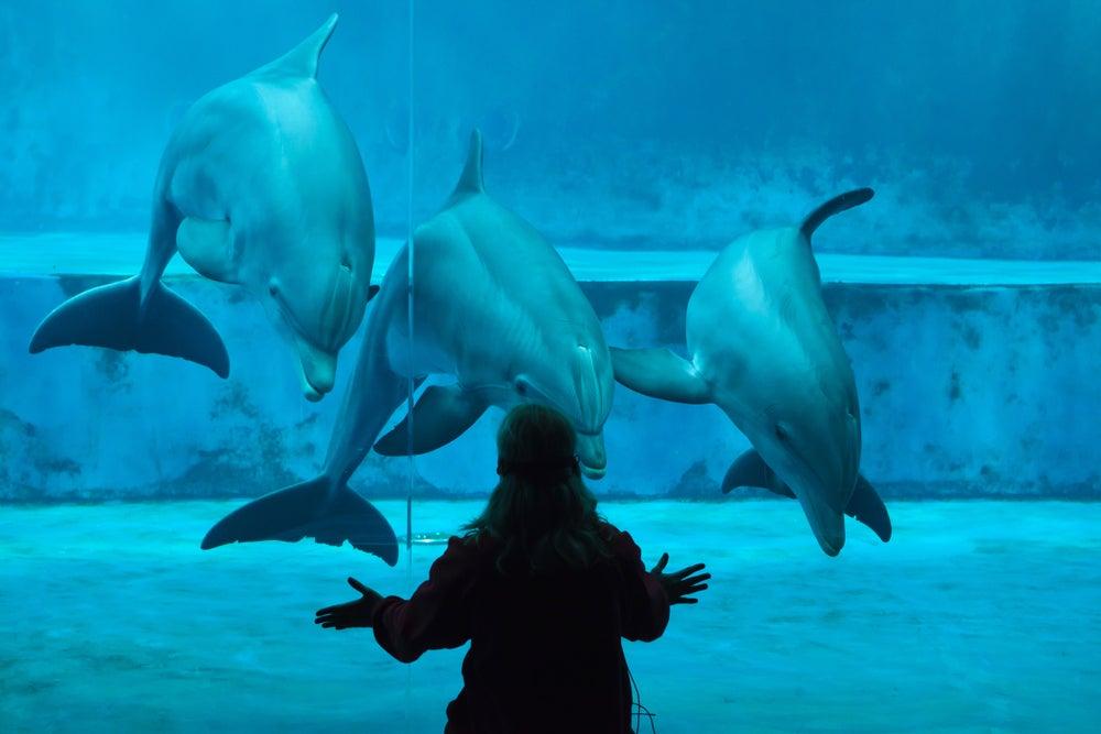 delfini acquario di Genova